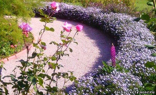 Цветы на заборах фото