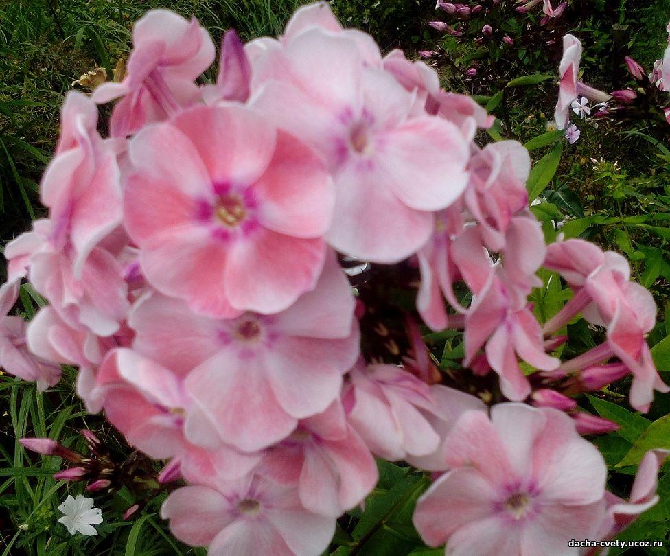 Фото гирлянды цветов